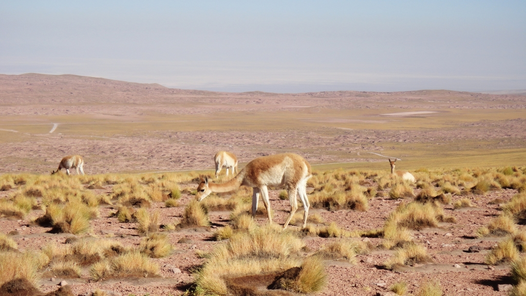 02_Atacama