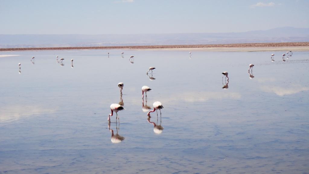 06_Atacama