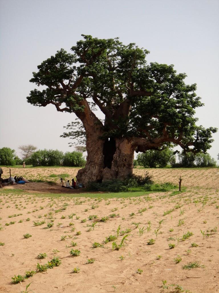 16_Senegal